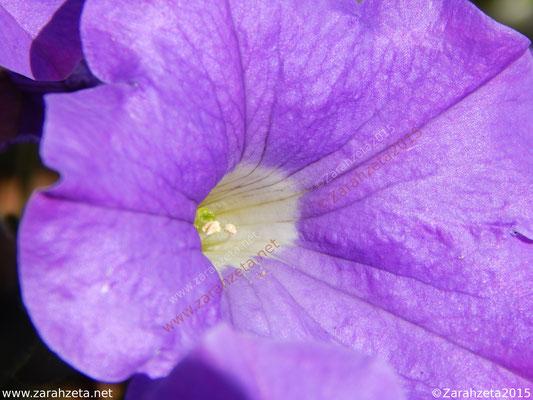 Einblick in einen Blütenstempel durch Makrofotografie