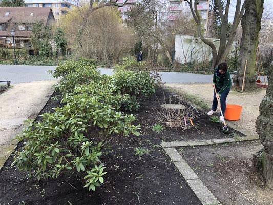 2019-003-16 Rhododendrenbeet säubern+Grubbern