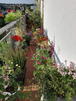 Balkon-Ostseite mit allerhand toller Blumen