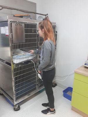 Eva in der Tierarztpraxis Neumann-Aukthun