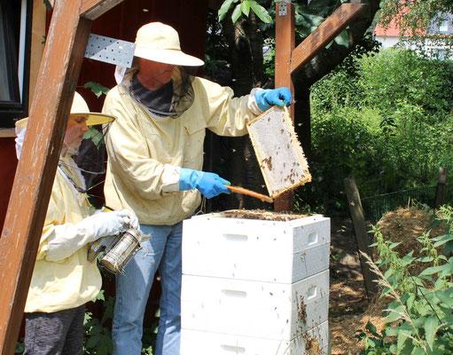 Abfegen der Bienen
