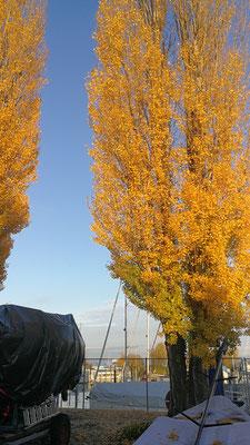 Herbst im Laub