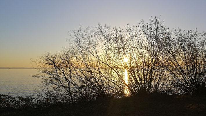 Morgenstimmung vor Romanshorn