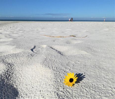 Siesta Key our sand looks like snow
