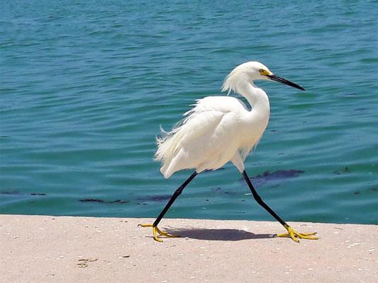Gulf Coast Florida Sarasota - love our birds