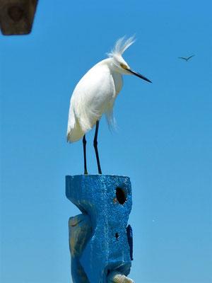 Great Florida Birding Trail - Siesta Key