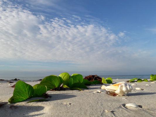 take a walk on our fabulous beaches