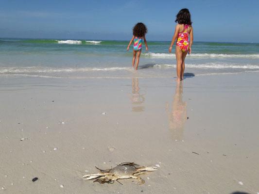 Siesta Key Beach perfect for kids