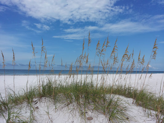 Siesta Key - little sand dunes