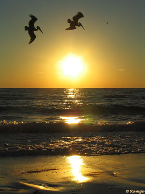Siesta Key - heavenly sunsets - Gulf Coast Florida