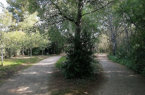 Dos senderos donde elegir  y cada nos conduce  a un sitio diferente