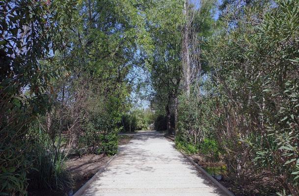 Un sendero para pasear y disfrutar de la naturaleza dentro de la ciudad