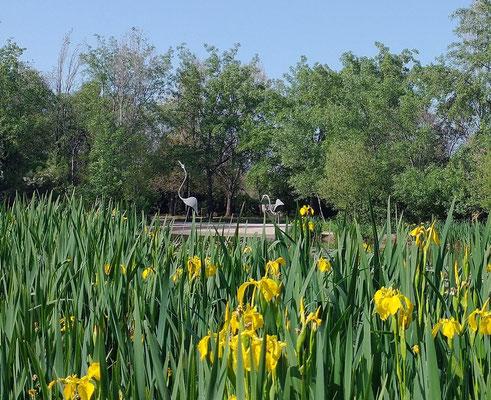 Figuras de aves acuáticas muy llamativas en medio del lago.