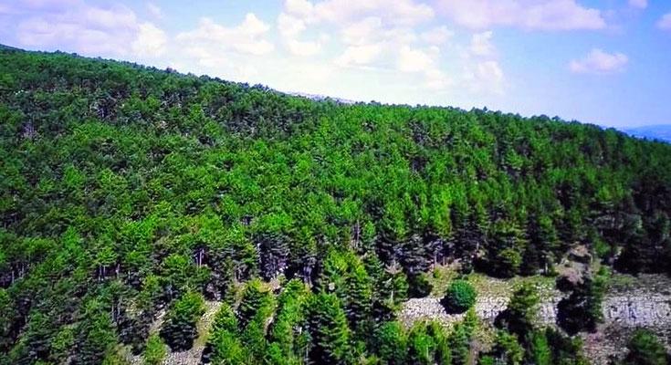 Zona boscosa en el Penyagolosa (Castellón) Comunidad Valenciana.