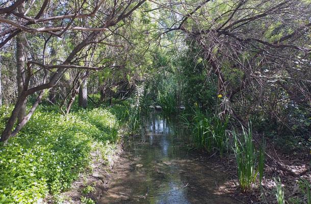 El parque cuanta con un gran suministro de agua  lo que hace que tenga una vegetación exuberante