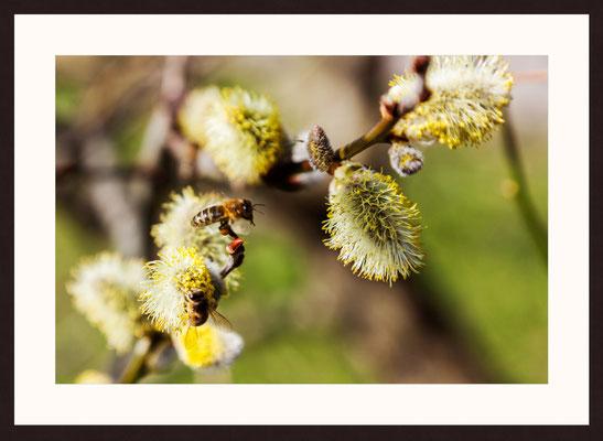 Bee Pollen, Graefenhausen