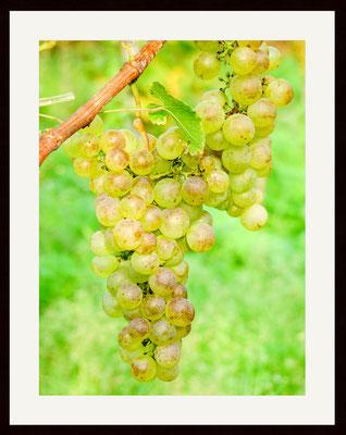 Grapes, Holzen