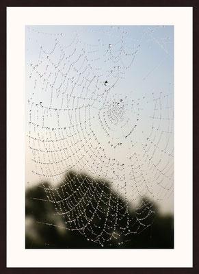 Spidernet, Puig Molto