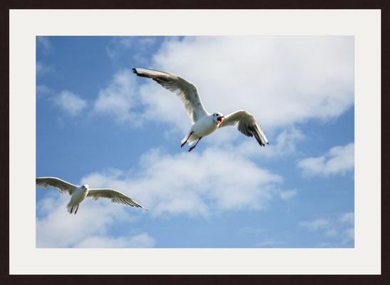Seagulls, Binz, Ruegen
