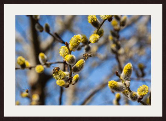 Bee Pollen, Birkenfeld