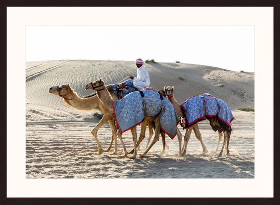 Camel Rider, Dubai