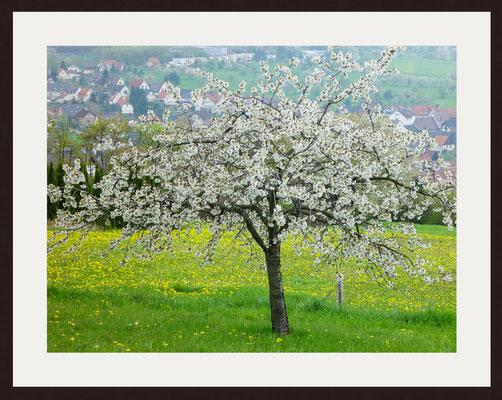 Spring, Graefenhausen