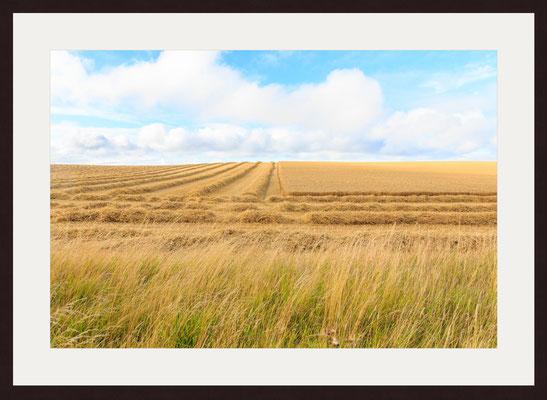 Harvest, Shalcombe