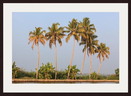 Back Waters, South Thrikkaripur, Kerala