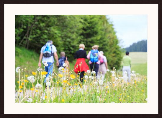 Wandern Im Schwarzwald, Furtwangen, Baden-Württemberg