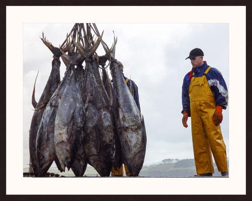 Tuna, Douarnenez