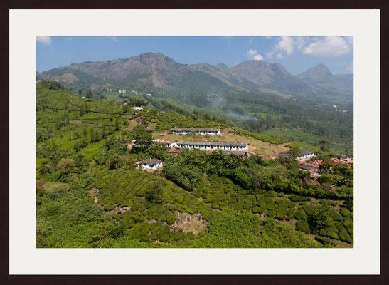 Tata Tea Estate, Periakanal, Kerala