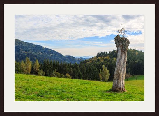 Southern Black Forest, Schwand