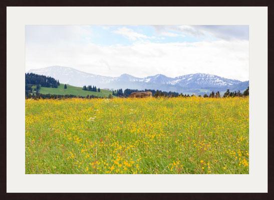 Swabia, Oberreute