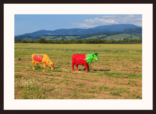 Colored Cows, Offenburg