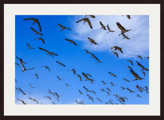 Kurja Resort, Bird View Point, Khichan, Rajasthan