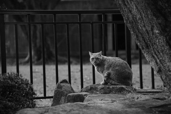 原爆ドームに住みつく猫