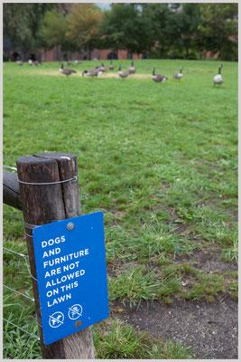 Dogs and Furniture....Hier nur für Enten ;)/Brooklyn