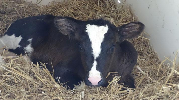 Lena, wurde um 12.25 Uhr geboren