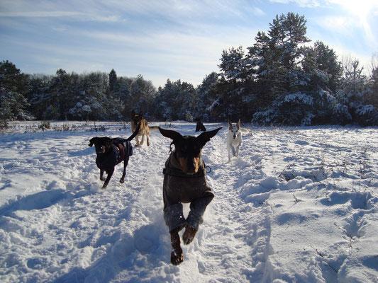 Hunde, Spaziergang, Schnee, Winter, Doggy Ville, Hundedienstleistungen