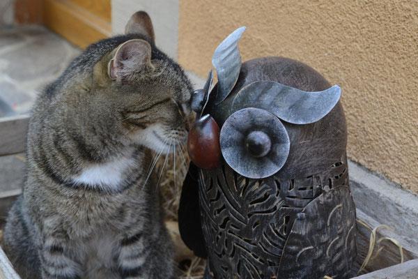 Katze trifft Eule!