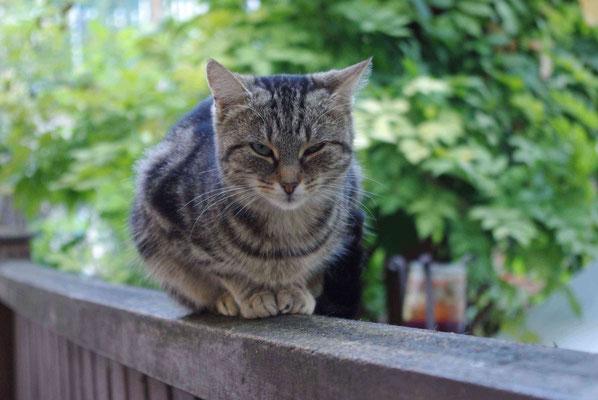 Unsere Katze wartet auf Gäste!