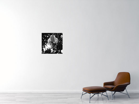 Magnolia, Alu Dibond 60x60cm, 283.00 CHF