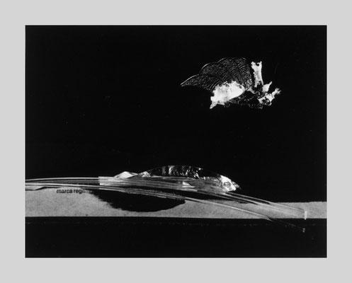 Untitled 65, 2002