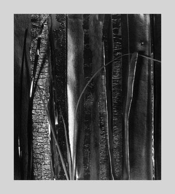 Woods 431, 1983