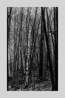 Berkshires, (VV), 1958