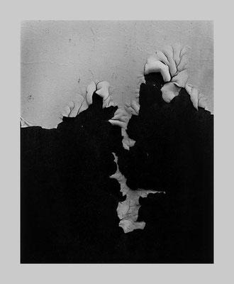 Peeling Paint, Interlochen, 1958