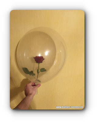 Echte Rose in einem Luftballon