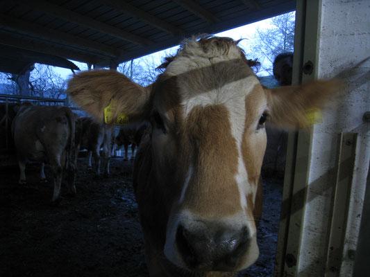 Flora, als Teenager, im Stall, im Hintergrund sind andere Tiere aus der Herde
