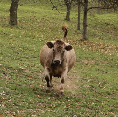 Lilo stürmt über die Weide