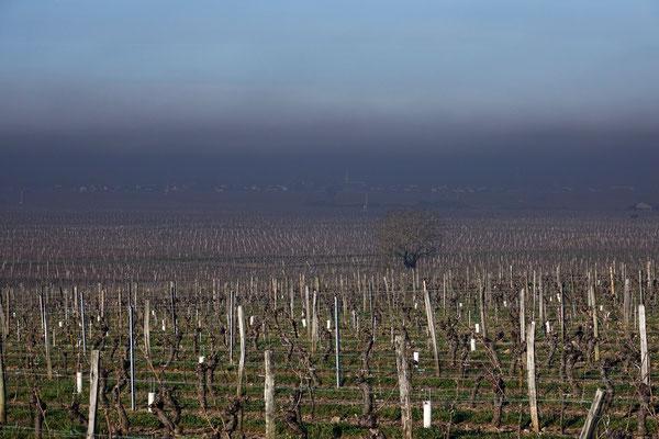 """"""" The fog""""  cliché réalisé par  Thierry"""